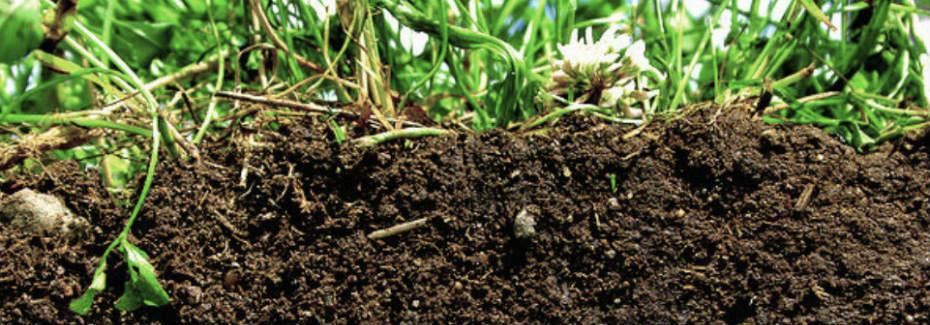 Healthy Soil Image